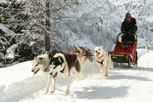 Livigno - dog sledding